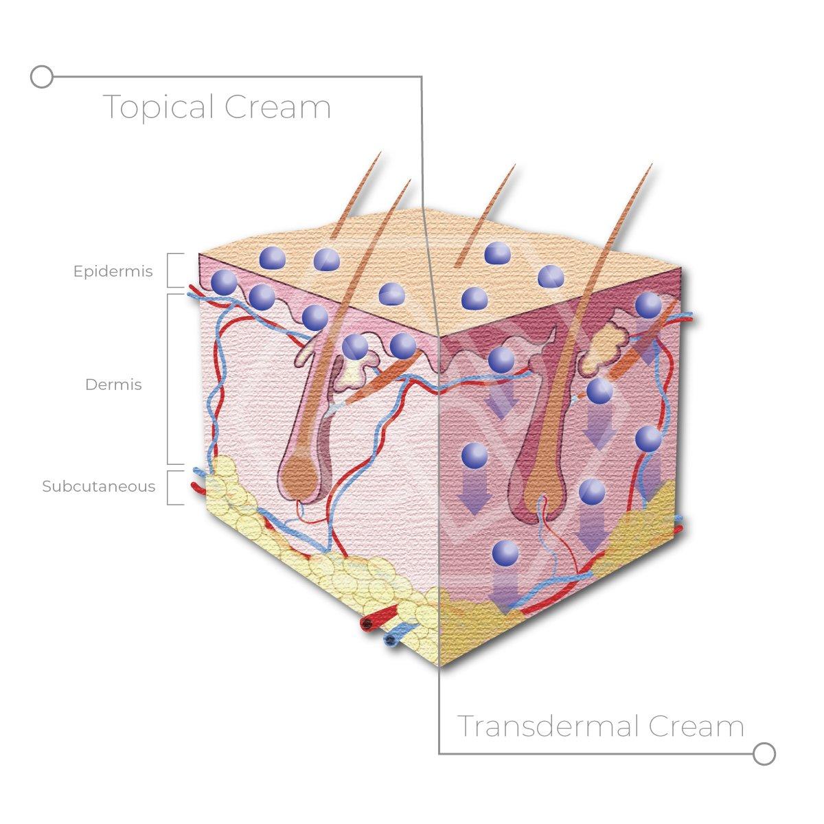 Topical Vs. Transdermal CBD Cream Effectiveness